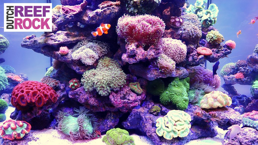 dutch reef Rock salt water aquarium